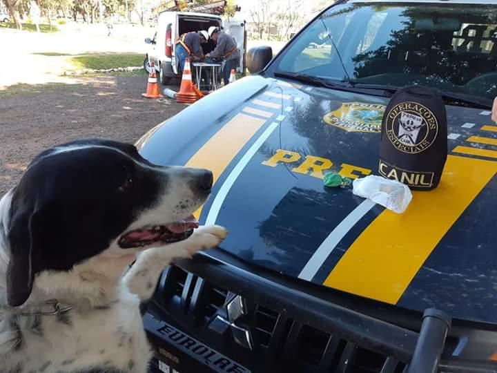 Cão do 7ºRPMon localiza Droga jogada por motorista na BR 285, em Coronel Barros