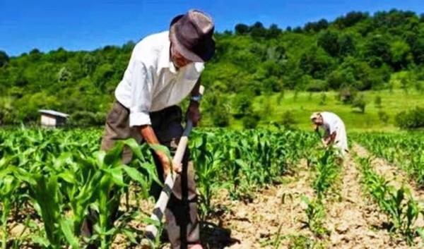 Agricultores não devem se cadastrar para auxílio de R$ 600