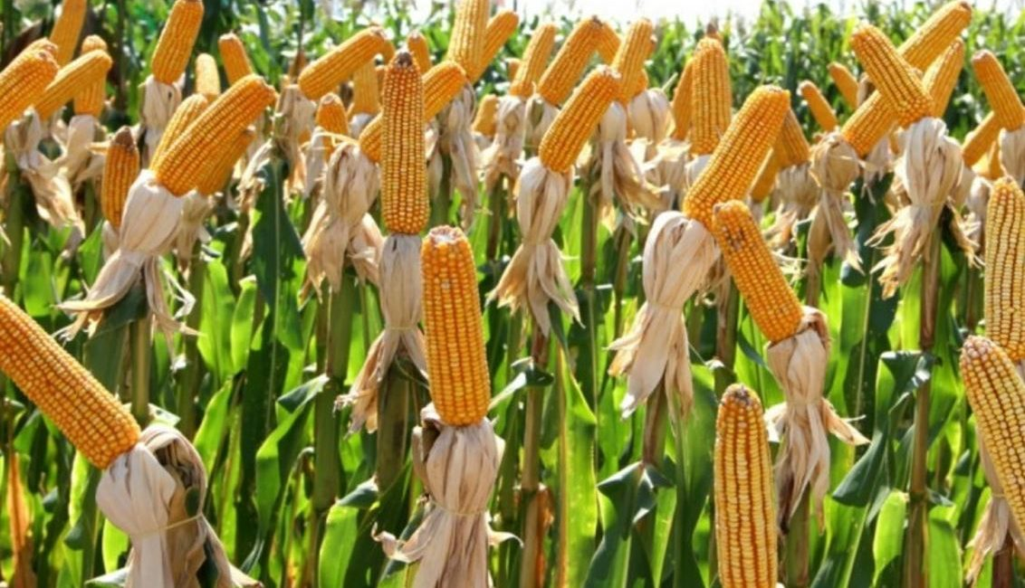 Coronel Bicaco: Comunicado da Secretaria de Agricultura
